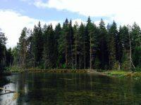 Изумрудное болото